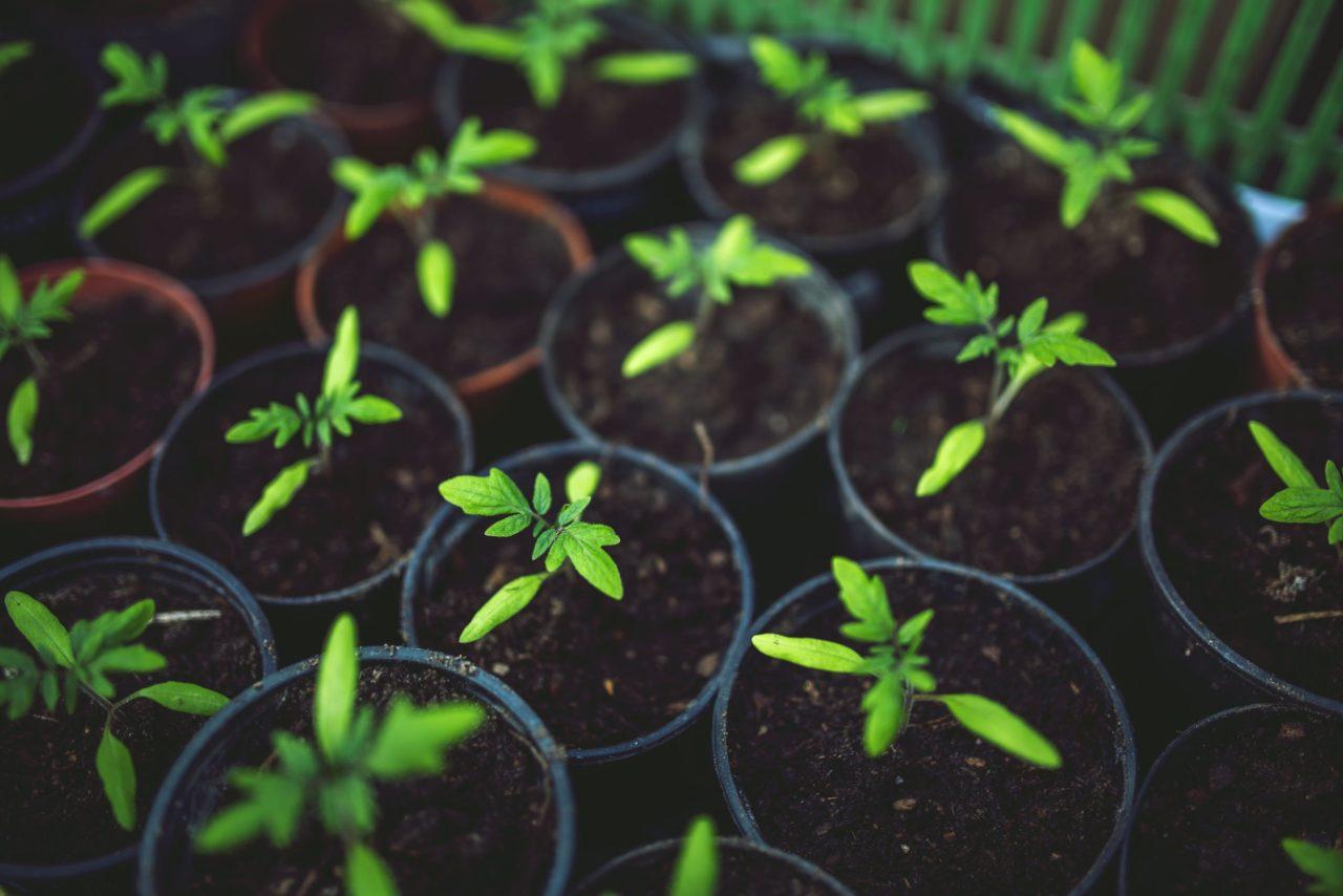 food-healthy-vegetables-village-1280x854.jpg
